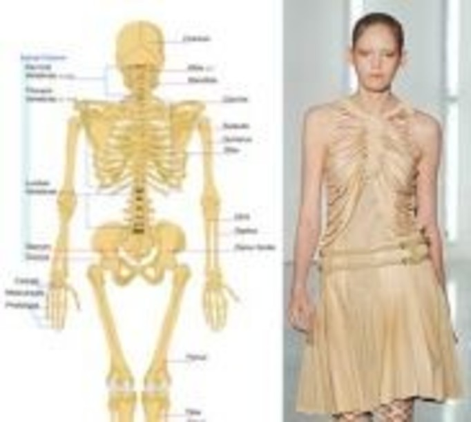 Szkieletory inspirują projektantów