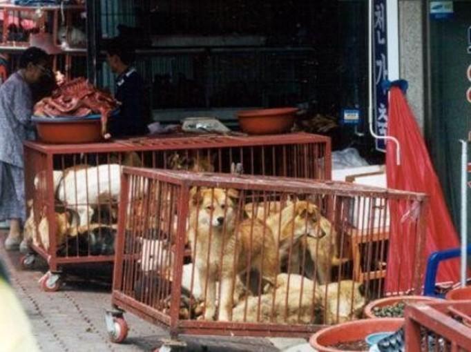 Masowo torturują i mordują psy!