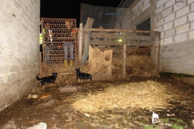 Przetrzymywał psy w fekaliach, głodził je i nie dawał im wody!