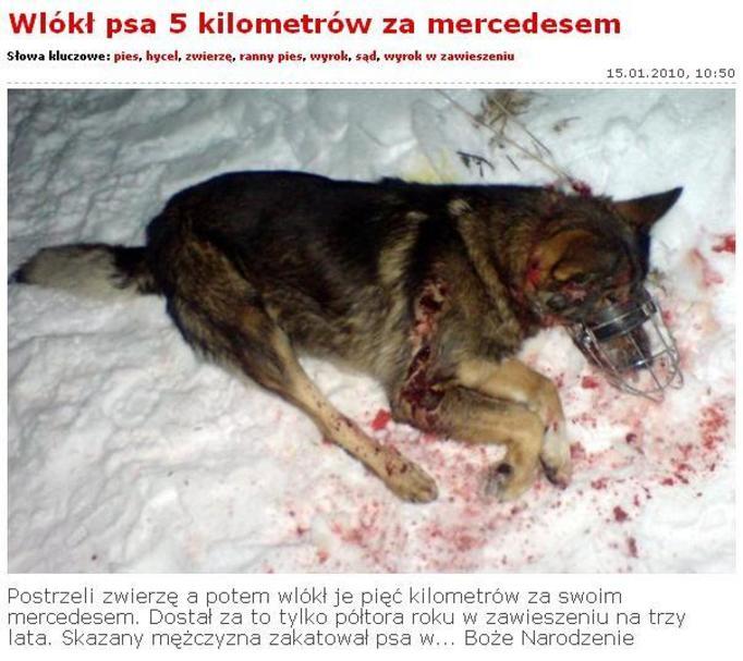 Postrzelił  psa, a później wlókł go 5 km za samochodem! W BOŻE NARODZENIE!