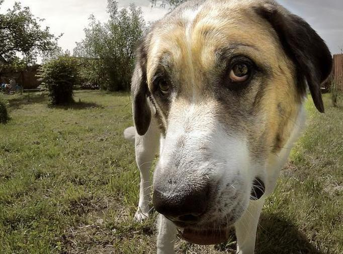 Terroryści zaszyli bomby w ciałach psów! Zwierzaki zdechły z bólu