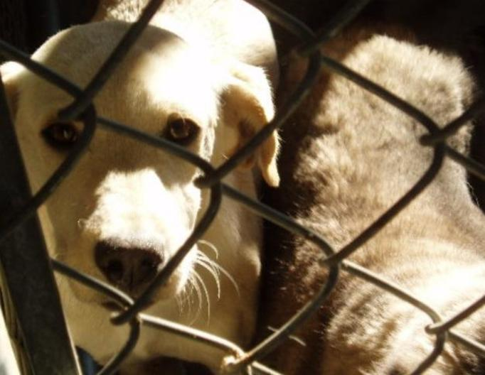 NIE WIERZYMY: Zabijanie bezdomnych psów w Rumunii będzie legalne?