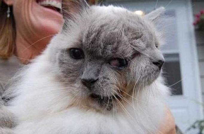 dwugłowy kot