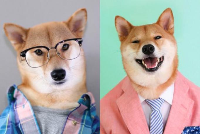 modny pies