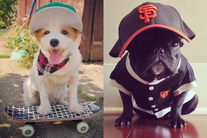 psy na instagramie