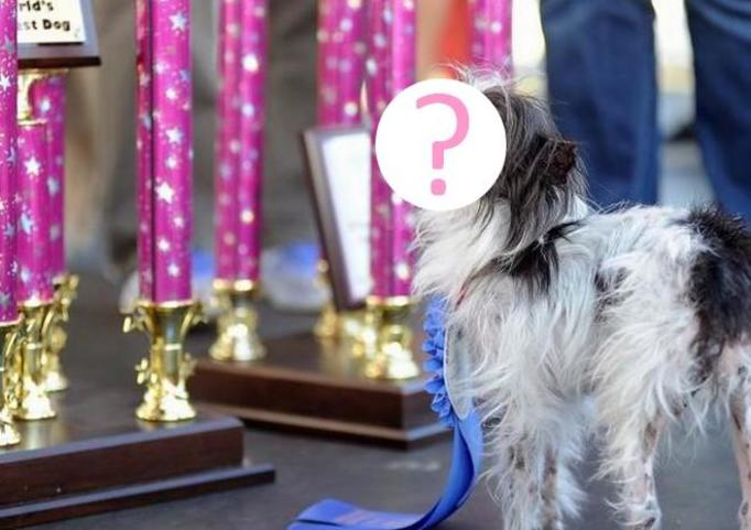 Najbrzydszy pies świata