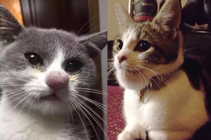 Koty użądlone przez osy