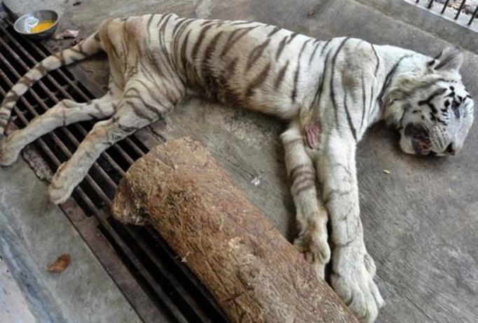 Śmiercionośne zoo z Indonezji