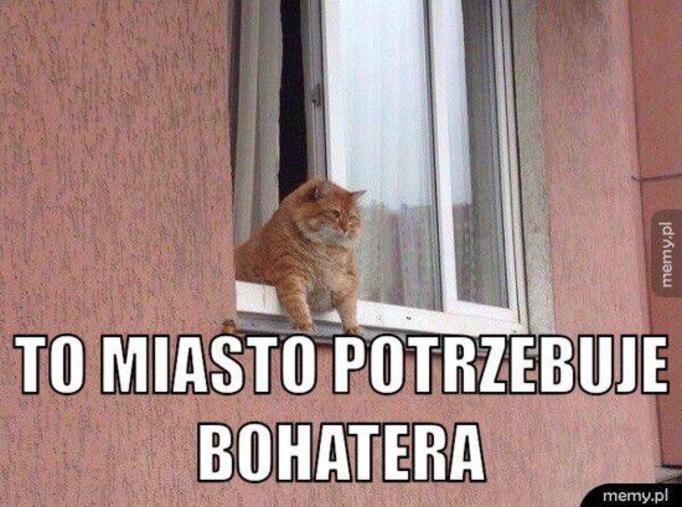 https://www.papilot.pl/i/b/2016/05/memy-o-kotach-65071310.jpg