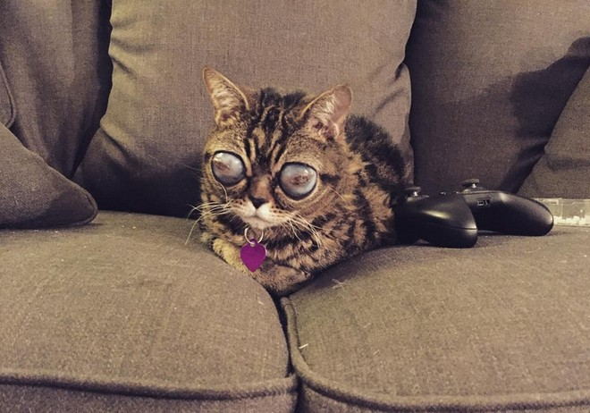 alien cat matilda