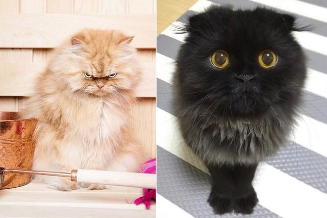 Koty na instagramie